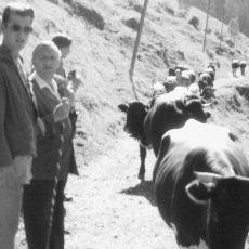 Neu in der Bildergalerie: Klassenfahrt 1955