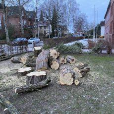 """Baum fällt…!"""